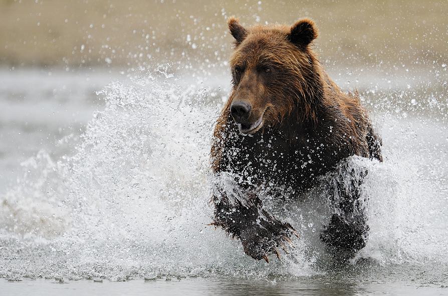 那些冒险拍摄的野生动物