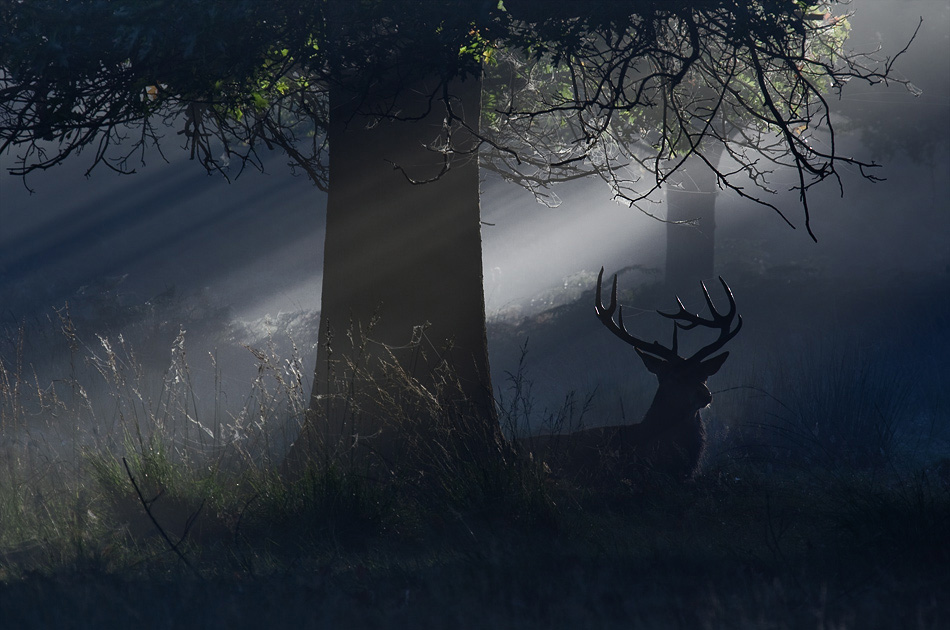 光影小动物图片