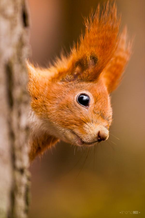 仿写松鼠这篇课文的第一段描写一种动物