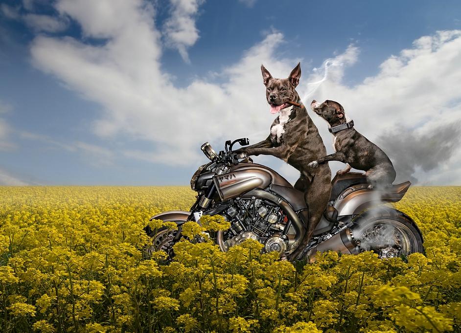 动物的灵感世界 国外摄影师后期创意作品-数码影像