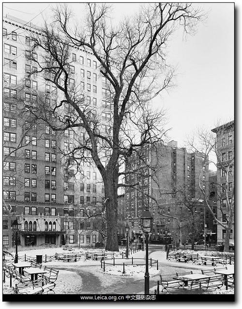 黑白纪实摄影纽约的树