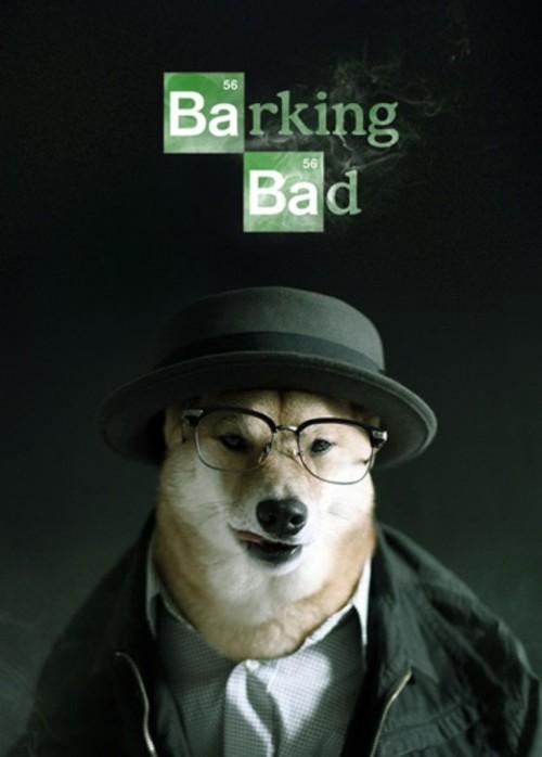 时尚狗狗的穿衣指南 搞笑创意摄影图赏