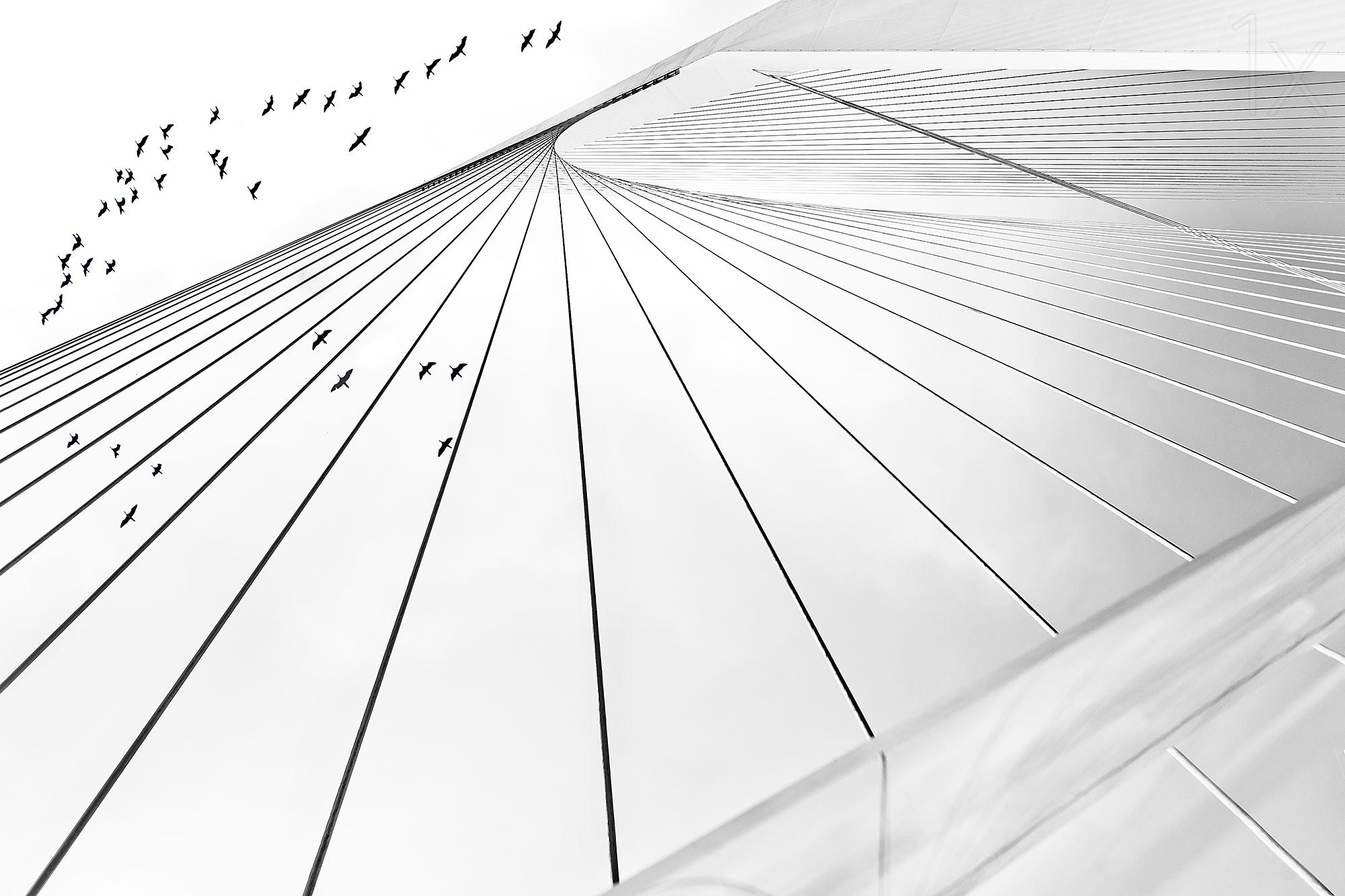 黑白线条的魔力 简单组合构成完美照片-zol科技头条