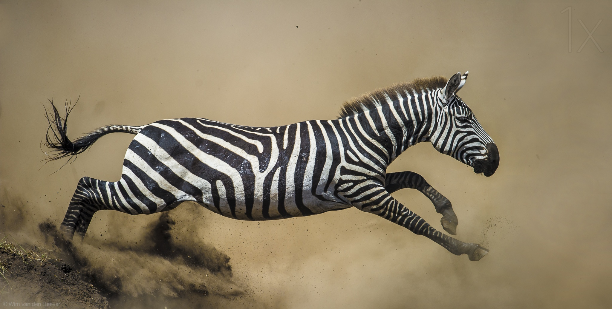 奔跑的犀牛,洗澡的猴子 野生动物照片集