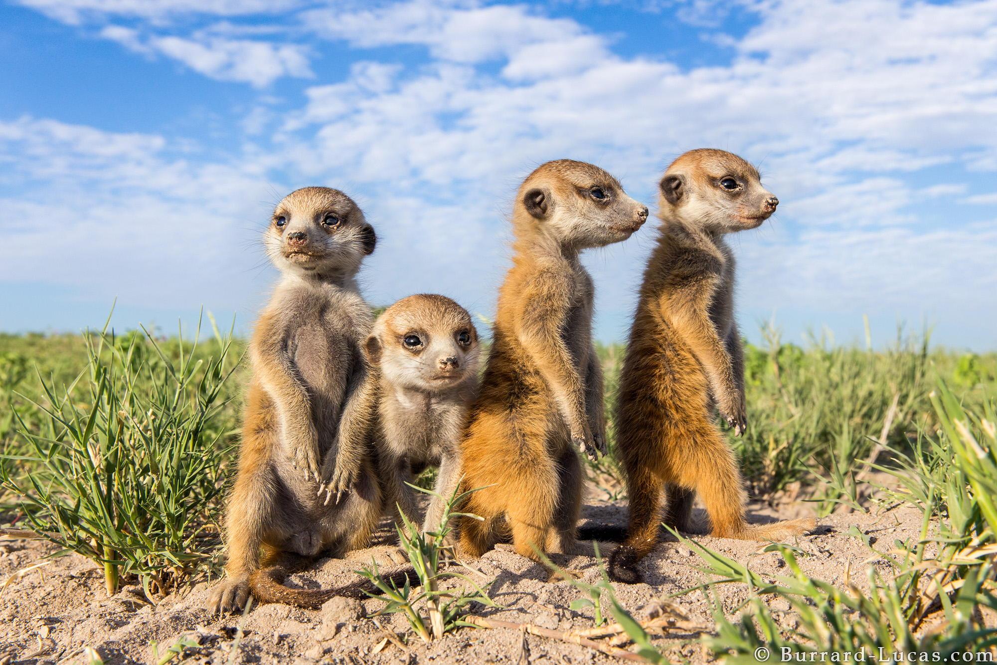 野生动物摄影师维勒 伯拉德 卢卡斯作品