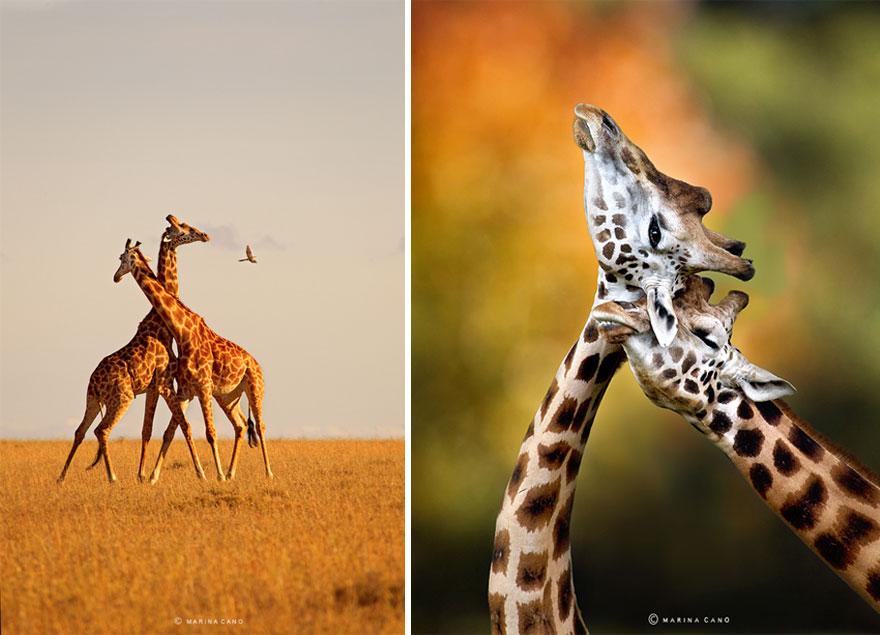冒险之作 震撼人心的野生动物近距离照片