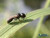 微世界 诺基亚 N8记录昆虫的日息劳作