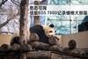 憨态可掬 佳能EOS 750D记录慵懒大熊猫