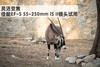 4级防抖 佳能EF-S 55-250mm IS II远射体验