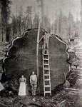 揭秘128年以来全世界最经典的20张照片