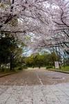 大C游世界 日本大阪著名的大阪城公园