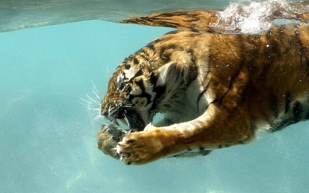 梦见老虎死得腐烂了