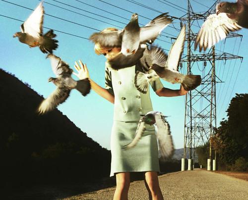希区柯克式的女摄影师