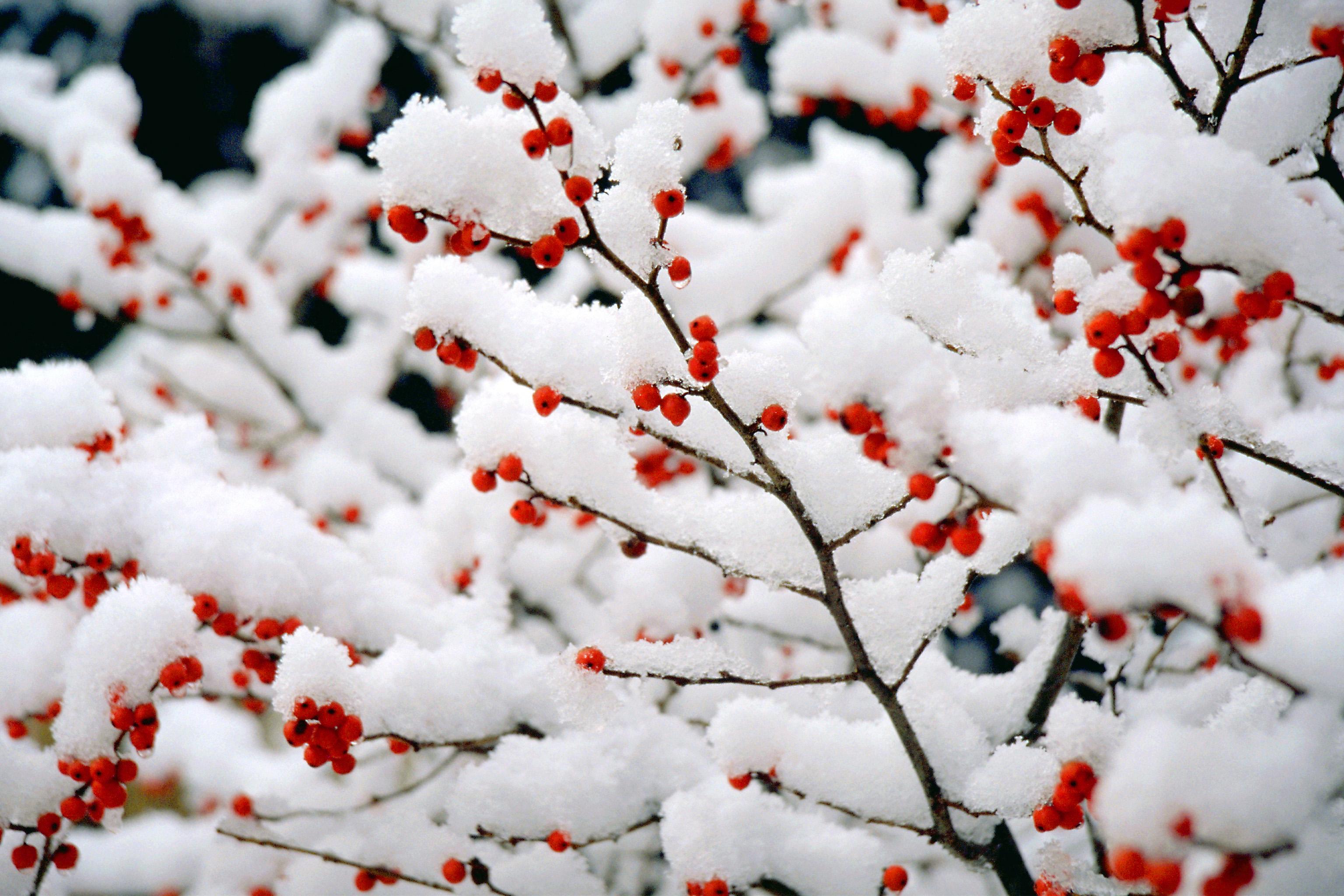 冬天梅花树枝简笔画