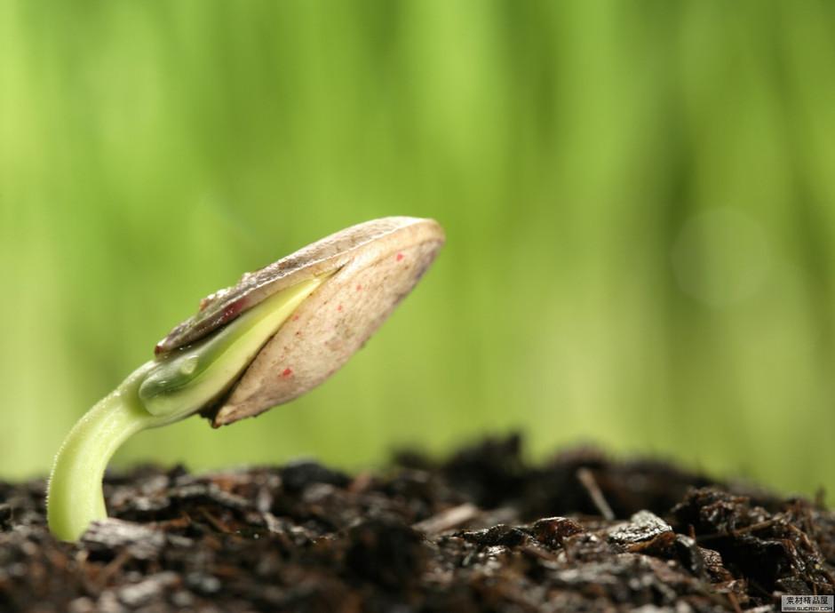 受生命的力量 植物种子发芽高清组图