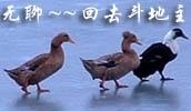 谢绝同性骚扰 搞笑QQ表情图片大全下载