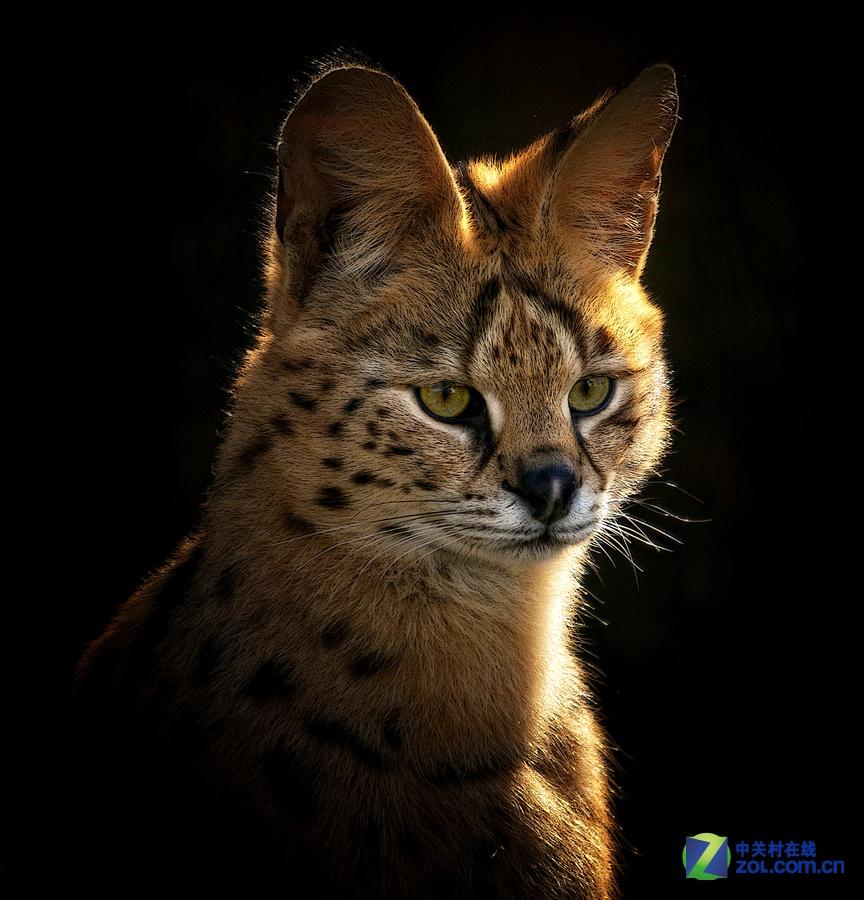 女摄影师与野生动物们的故事