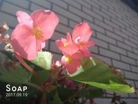 SUGAR SOAP R11(标准版/全网通)样张秀5