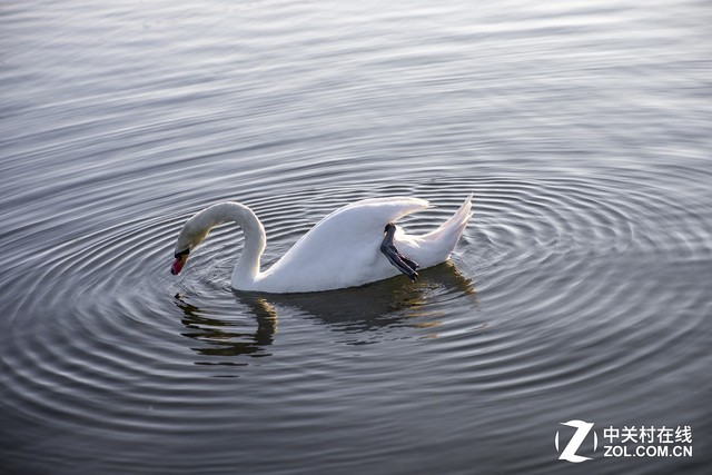 看图学摄影:如何让动物看起来正在运动