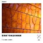 OPPO Find X3 Pro(12GB/256GB/全网通/5G版)样张秀3